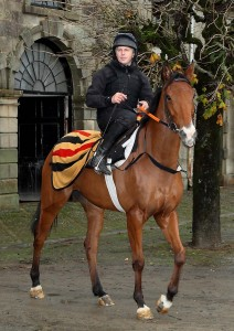 Waterford trainer Shay Barry preparing for the gallops
