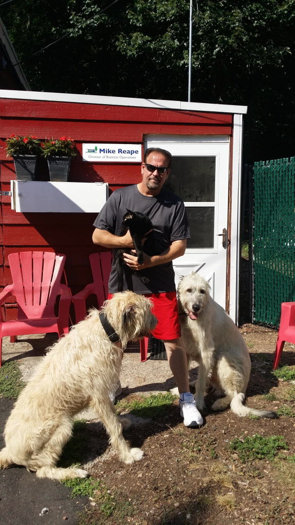Mike with his Irish wolfhounds 'Kobe' and 'Brian May' and cat 'The Madam'
