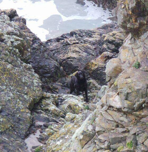 Gertie pictured after being found on the rocks just 800 metres from the D'Arcy family home at Ballyvooney, Stradbally.