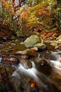 Picturesque Crough Wood. Photo: Noel Browne.
