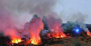 A gorse fire in Williamstown. | Photo: Noel Browne