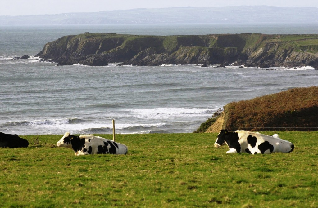 Land prices in Waterford rose by 23% during 2018, representing a year-on-year per acre increase of €10,450, according to the Irish Farmers Journal.